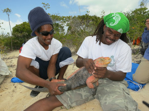 Bahamas National Trust staff, David Clare and Scott Johnson working with an Andros Iguana on Shedd's citizen science research expedition. Photos by Chuck Knapp.